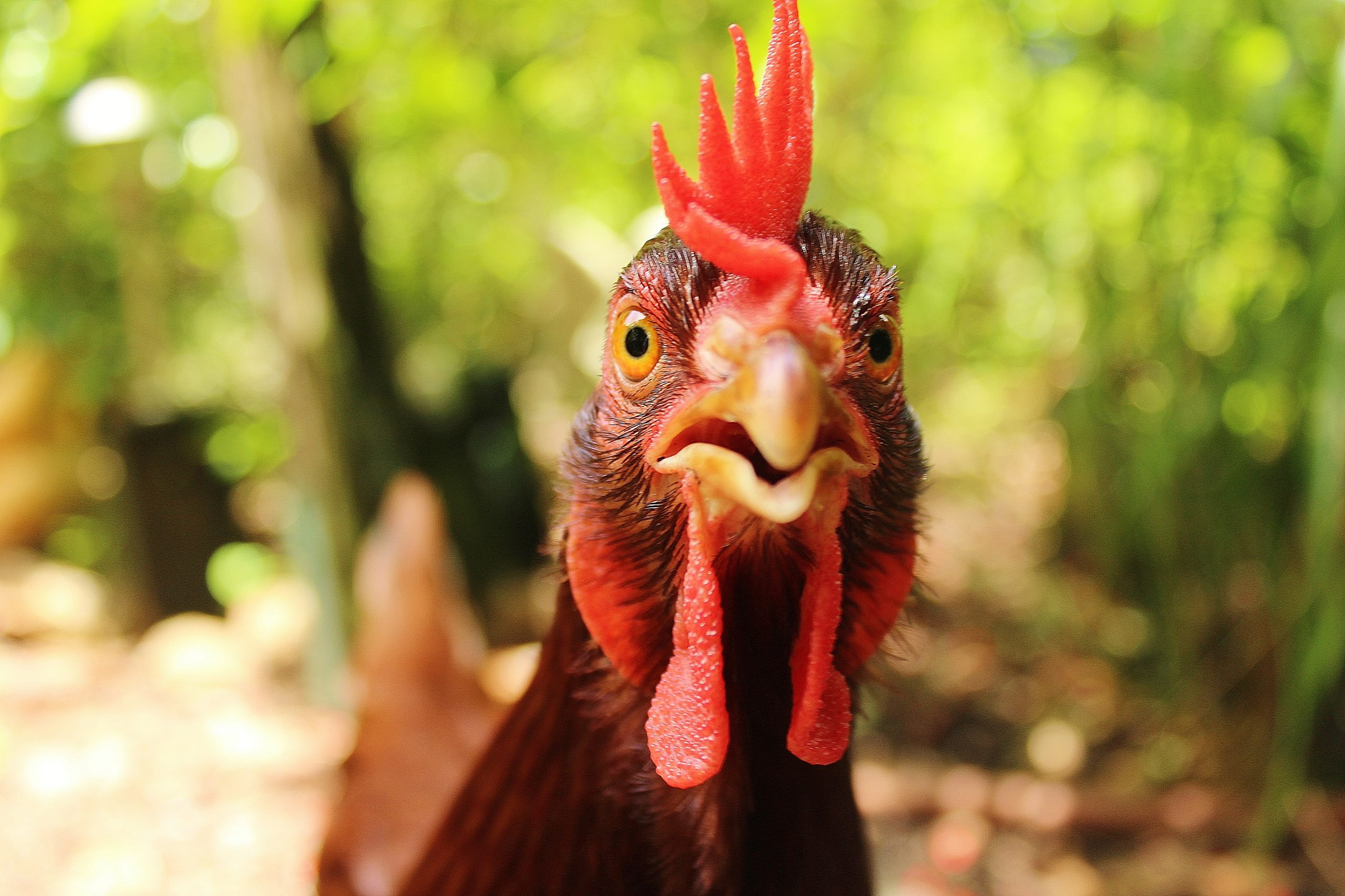 Improve Your Chicken Pics with These 6 Tips