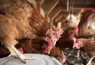 7 Chicken Coop Basics That Your Chickens Need