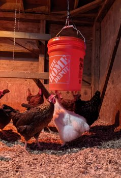 DIY-chicken-waterer-with-nipples